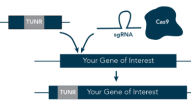 100 % Control of Your Gene Expression